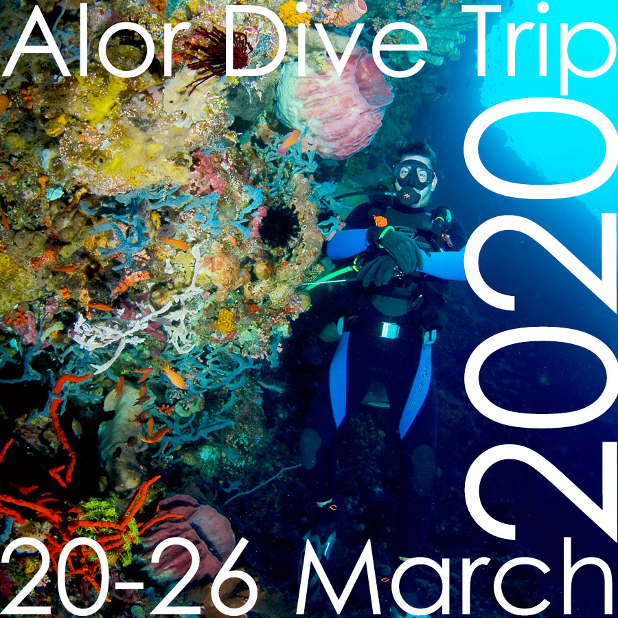 Alor Diving with Donovan, Alor island, scuba, diving, donovan whitford, packages, trips, holiday, NTT, Indonesia, Nusa Tenggara Timur, East Nusa Tenggara, 2019